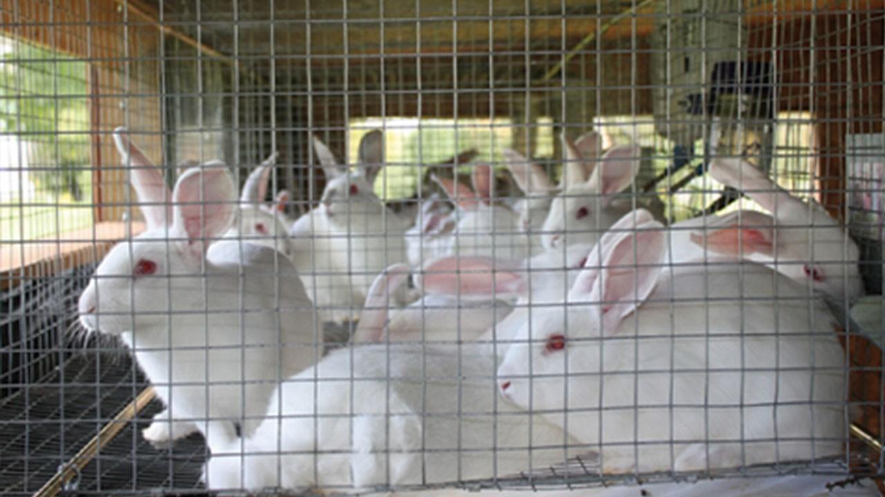 lưới thép Chuồng nuôi thỏ