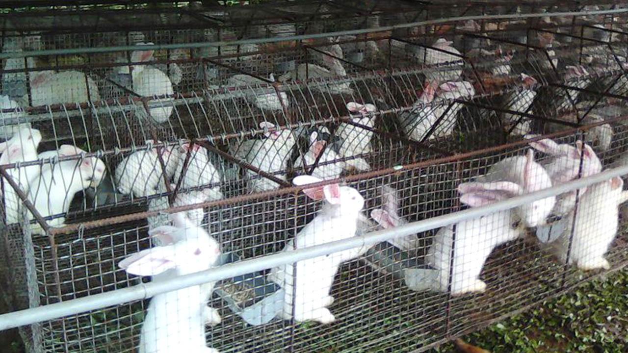 Lưới chăn nuôi thỏ