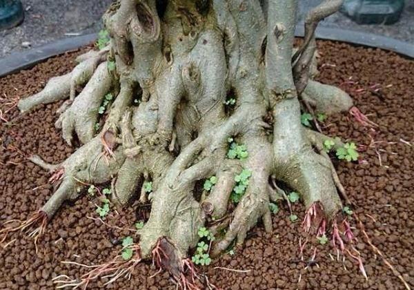 nhôm đen uốn cây