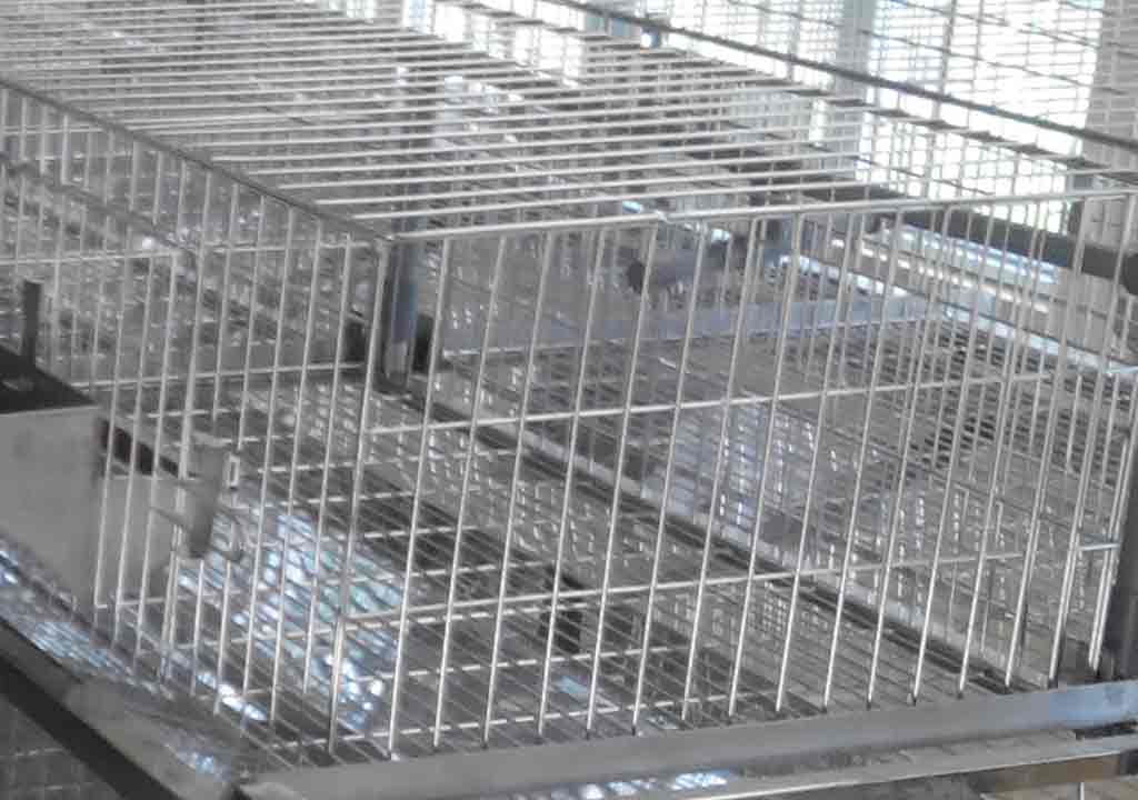 Chuồng nuôi dúi bằng lưới thép hàn tại Đà Nẵng