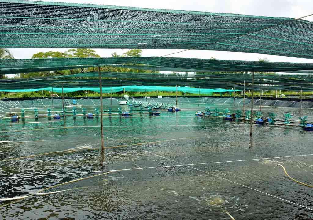 Lưới che nắng ao cá