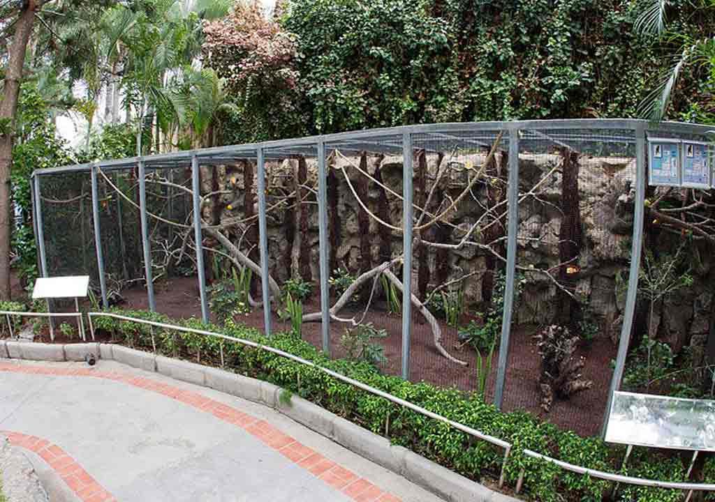 Lưới kẽm làm chuồng chim