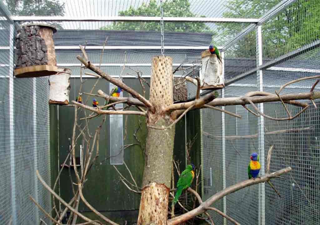 làm chuồng nuôi chim bằng lưới thép